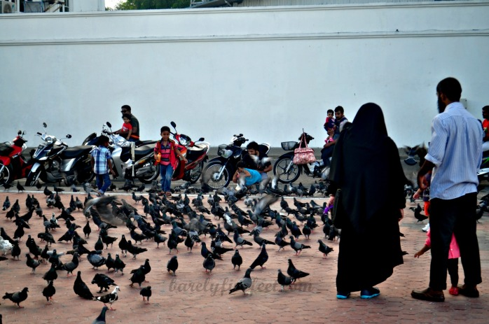 Pigeons! Pigeons! Pigeons! Interact with them at the Male City harbor area.